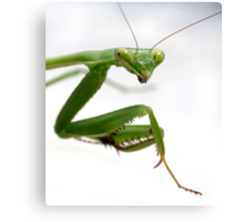 False Garden Mantis 2 Canvas Print