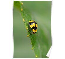 Yellow Ladybug 1 Poster