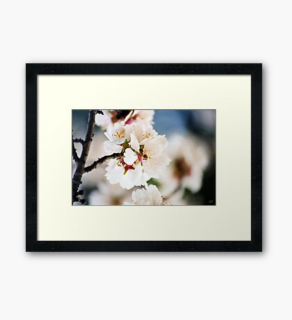 Flowering Almond and Friend Framed Print