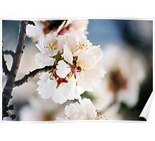 Flowering Almond and Friend Poster