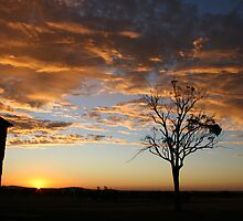 Sunset at Buckrabanyule by Kylie Paterson