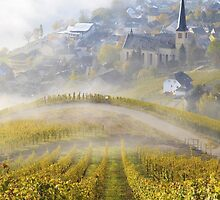 Misty sunrise over the vineyards by Natuuraandemuur