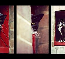 Cat Trilogy by Craig Watson