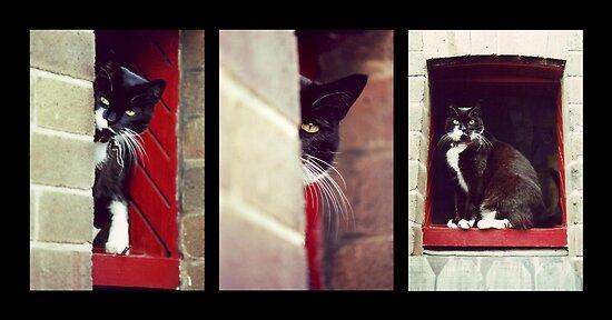 Cat Trilogy by Craig Watson