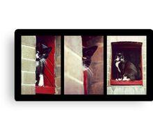Cat Trilogy Canvas Print