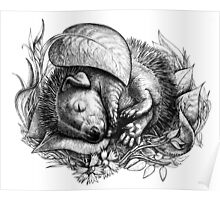 Baby hedgehog sleeping Poster