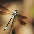Dragonfly by AnnaKT