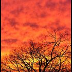 Orange fire sunset by webgrrl
