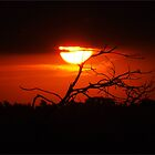 Red Sunset Silhouette by webgrrl