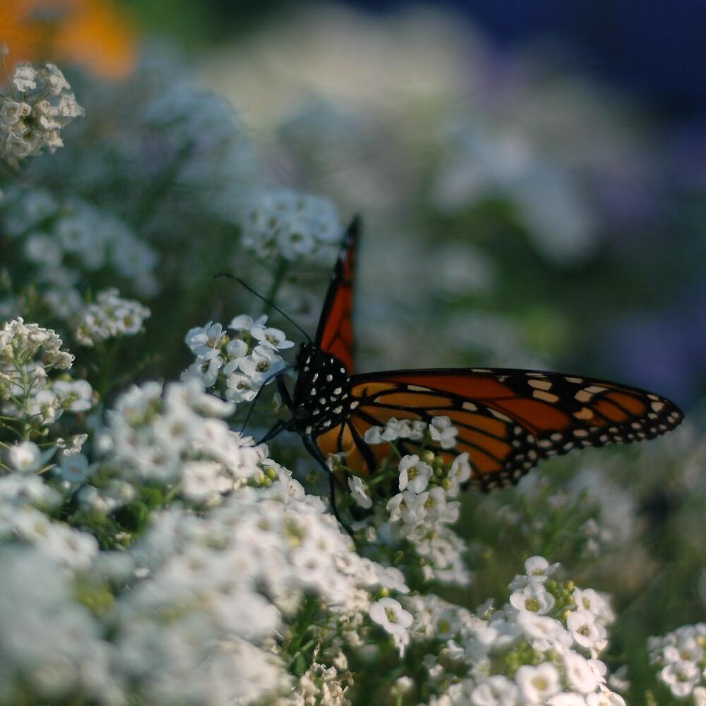 Butterfly by IrishGill
