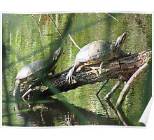 Turtles on Log Poster
