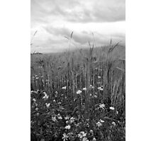 Growing On the Edge Photographic Print