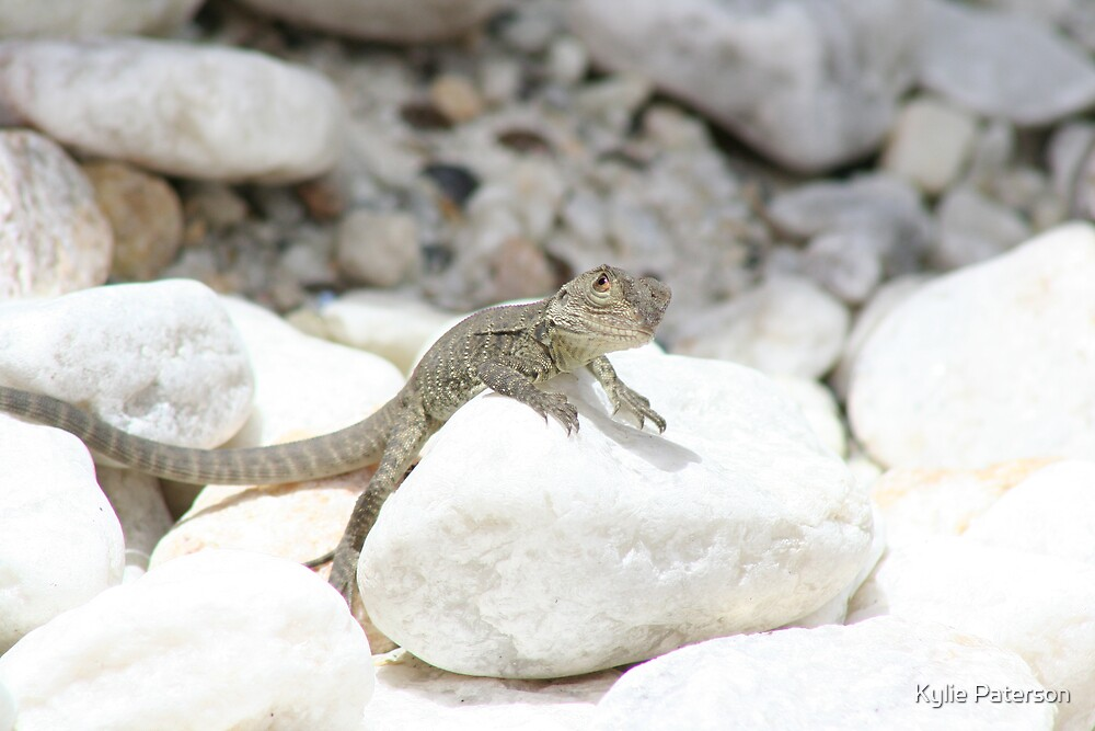 Lizard on the rocks by Kylie Paterson