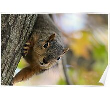 Squirrel Scientists disproved gravity years ago... Poster