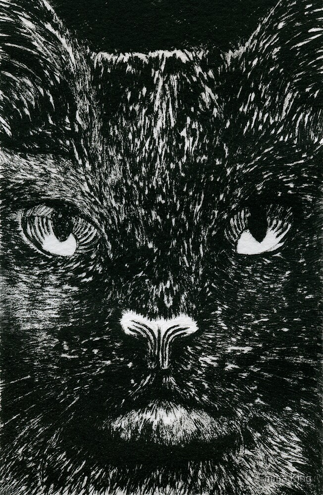 In The Eyes Of A Cat by Emma King