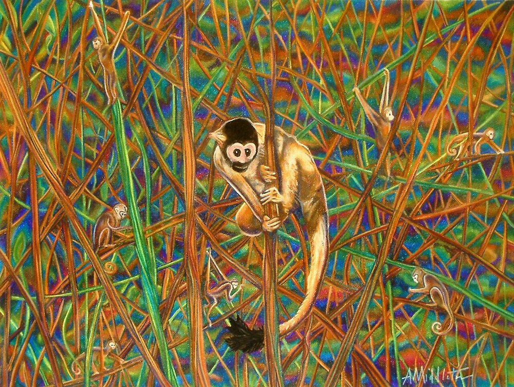 Spider Monkey by Anthony Middleton