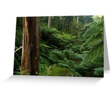 Ferns, Otway Ranges Greeting Card