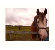 2 Horseys Donegal Art Print