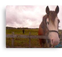 2 Horseys Donegal Metal Print