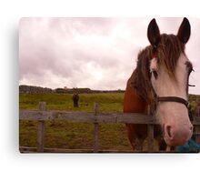2 Horseys Donegal Canvas Print