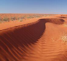 Madigan Line Sand Hill Simpson Desert  by Joe Mortelliti