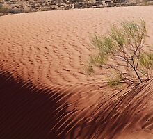 Perched,Simpson Desert,N.T. by Joe Mortelliti