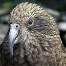 Kea Kea by kies