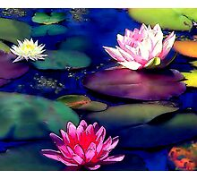 Lily Pond,  Photographic Print