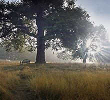 Lifting Fog. by kelvinLemur