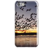 First Flight at Bosque del Apache iPhone Case/Skin