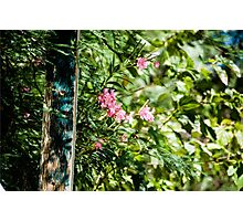 Pink Flower and Green Leaves Photographic Print