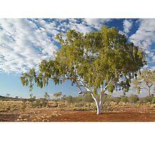 Ghost Gum,Batton Hill North Simpson Desert Photographic Print