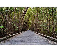 Not the Yellowbrick Road!  Photographic Print