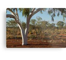 Ghost Gum,Outback Australia,N.T. Metal Print