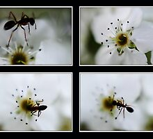 Ants by Helen  Page