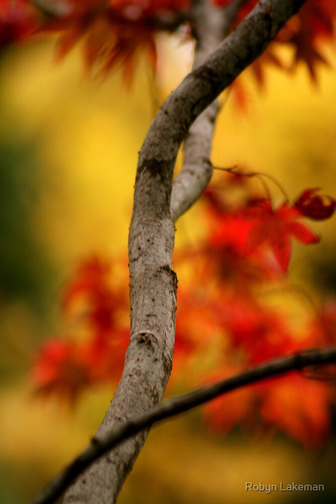 Autumnal colours by Robyn Lakeman