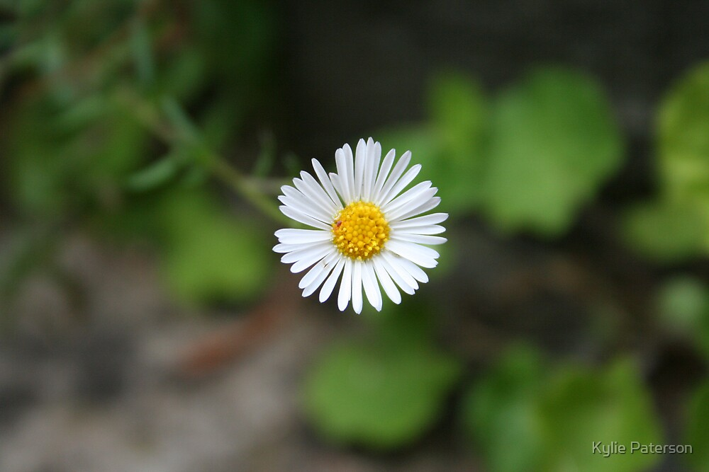 Tiny White Flower by Kylie Paterson