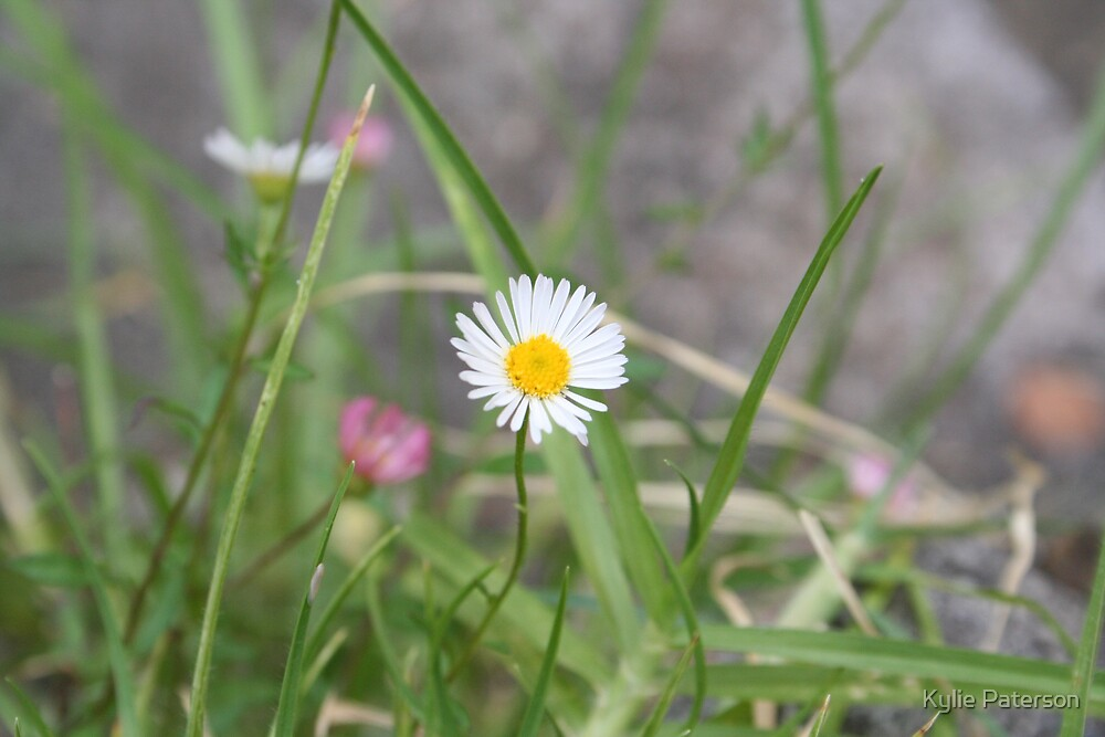 Tiny White Flower 2 by Kylie Paterson