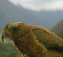 Kea by IrishGill
