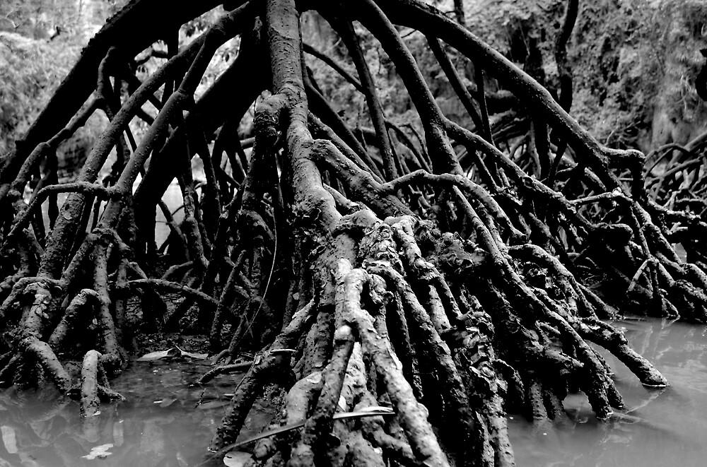 walking tree by kenan