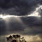 giving light by webgrrl