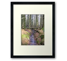 Bare trees in the wood Framed Print