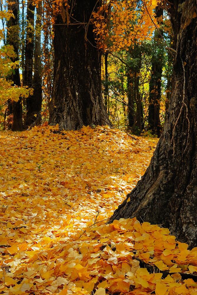 Autumn in Orange by Geoffrey Chang