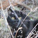 'Jungle' Cat by Sandra Chung