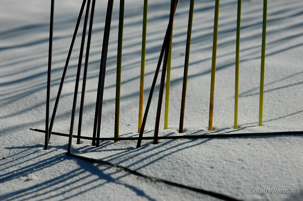 reeds in sand by Sarah Wheaton