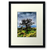 Fruit Tree Framed Print