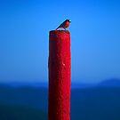 Red, Red, Robin Redbreast by John Barratt