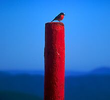 Red, Red, Robin Redbreast by John Barratt