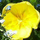 Flower by brendan harkom