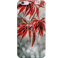 Japanese Red Maple Leaves  iPhone Case/Skin
